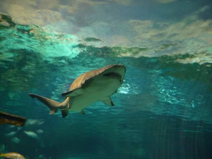 ~Sharks~
