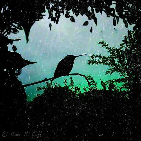 ~ Wild Birds~